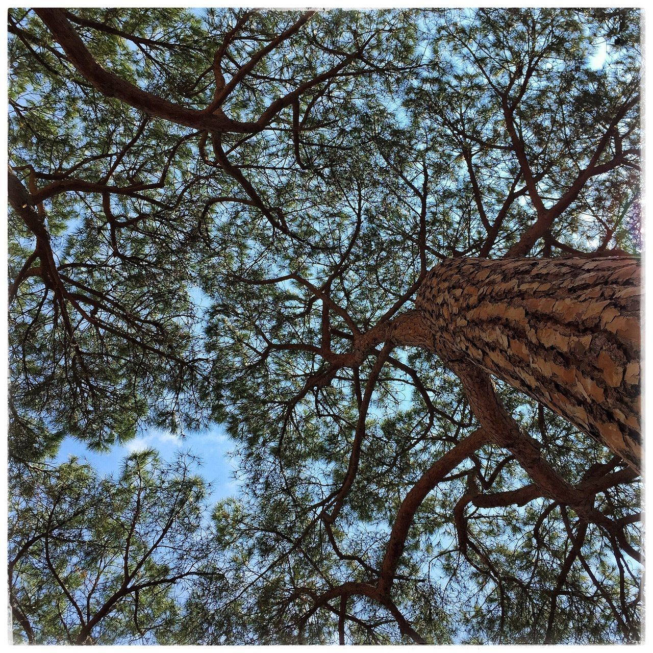 low angle view, tree, branch, nature, day, outdoors, beauty in nature, no people, growth, sky, close-up
