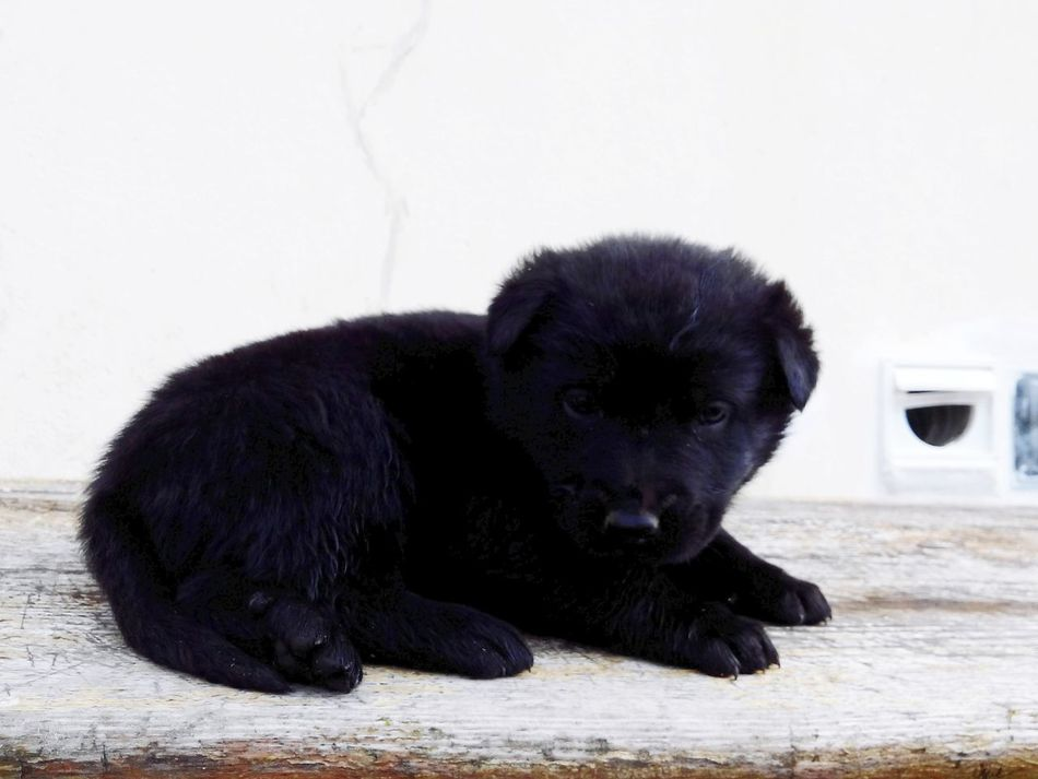 Chien♥ Animal Love Sweet♡ My Dogs Are Cooler Than Your Kids Petit Chiot Animal Photography Cute Pets