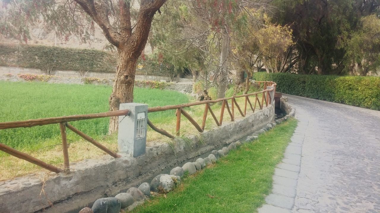 tree, grass, day, railing, nature, outdoors, the way forward, no people, tranquility, growth, tranquil scene, green color, landscape, beauty in nature, road, scenics, walkway, tree trunk, bare tree, water