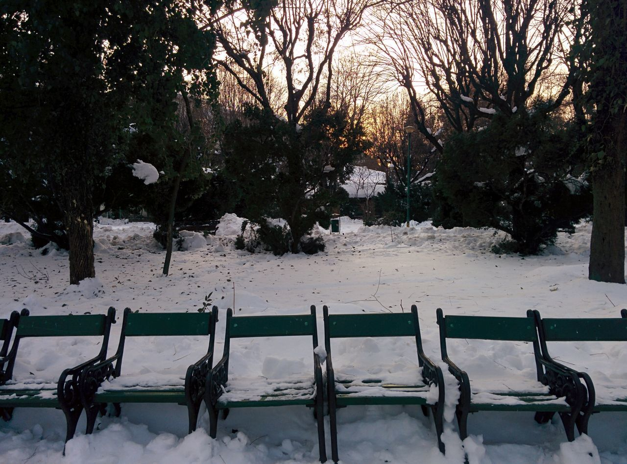 Tree Nature No People Tranquility Outdoors Beauty In Nature Day Branch Sky Bench Benches Take A Sit Winter Park