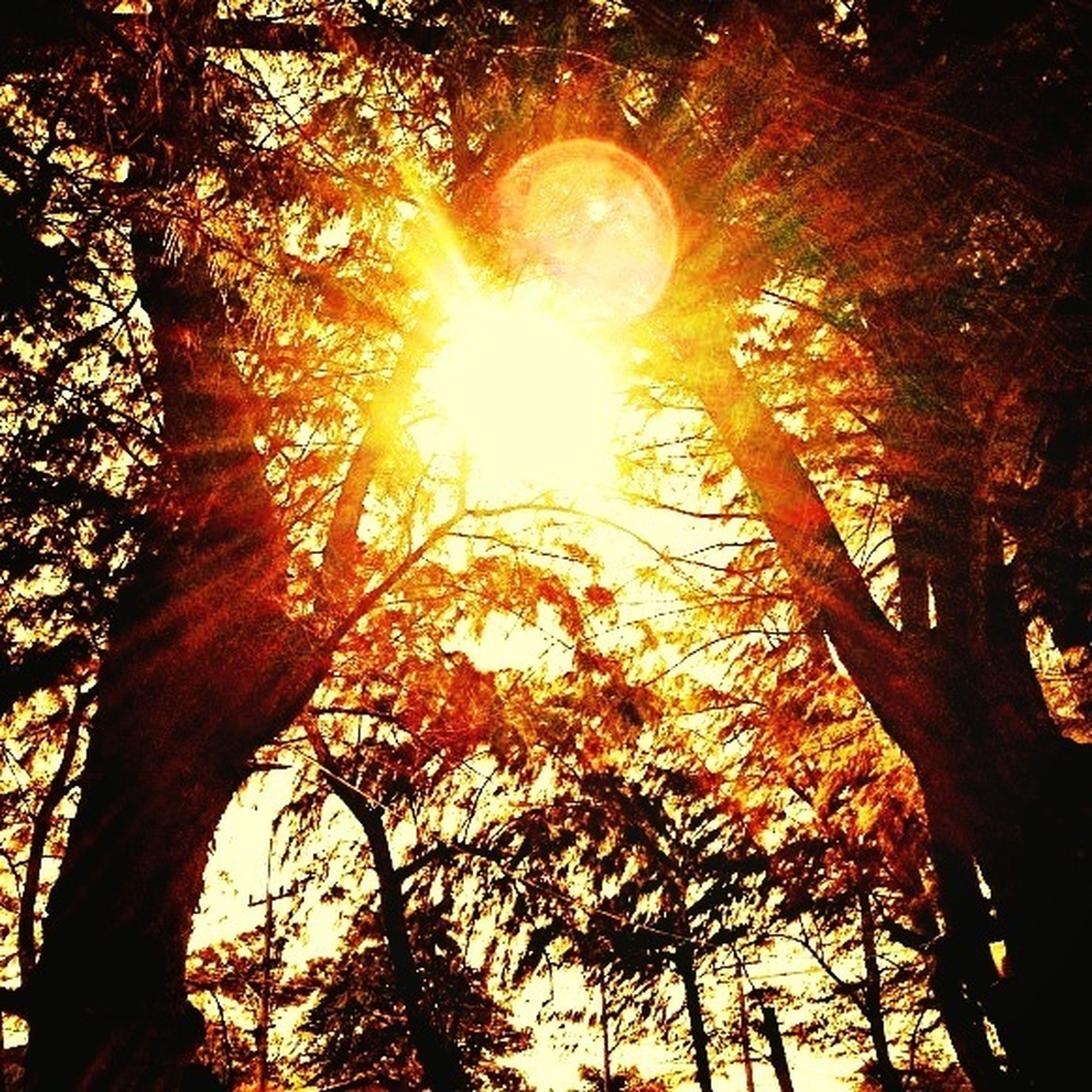 tree, sun, low angle view, sunbeam, branch, sunlight, lens flare, tranquility, growth, back lit, silhouette, nature, streaming, tree trunk, beauty in nature, sky, bright, no people, scenics, glowing