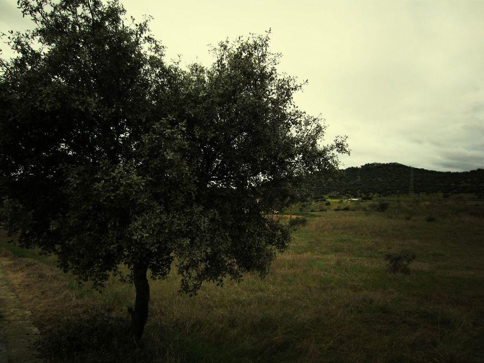 San Roman De Los Montes Nature_collection Landscape Taking Photos