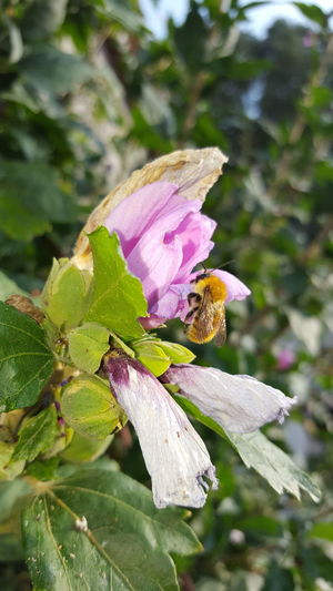 Animal Themes One Animal Flower Animals In The Wild Wildlife Insect Freshness Fragility Pollination Close-up Season  Petal Beauty In Nature Honey Bee Growth Bee Springtime Nature Zoology Plant