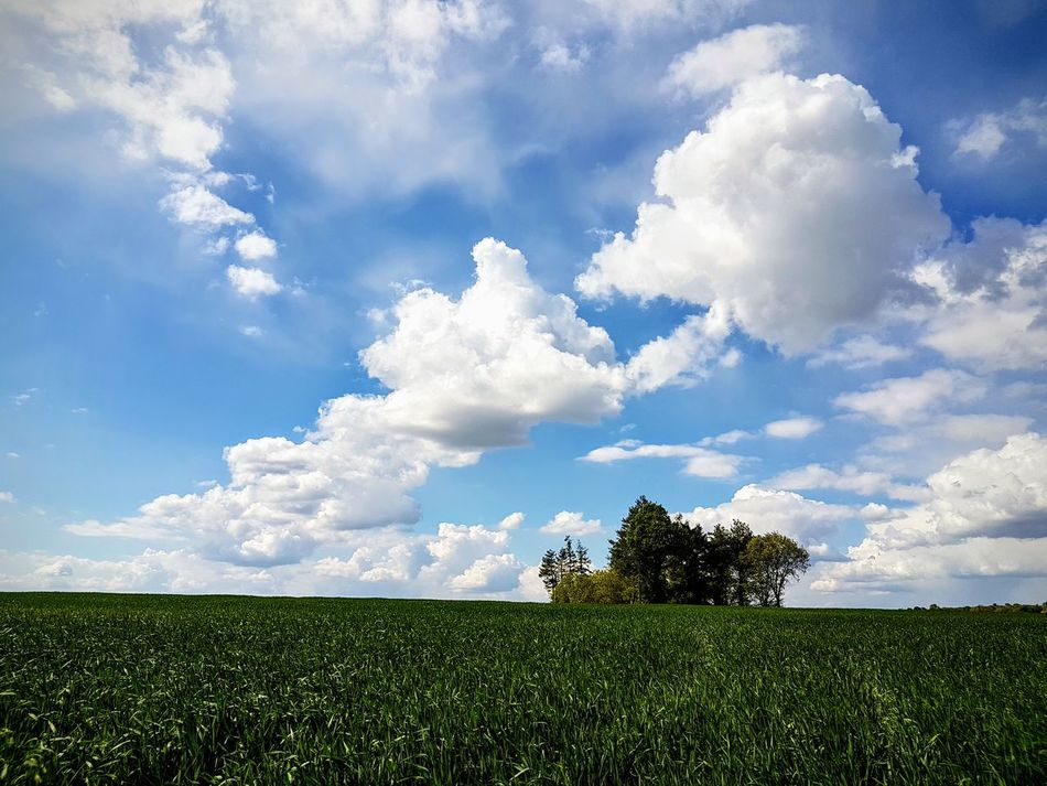 Cloud - Sky Tree Sky Nature Tranquility Beauty In Nature No People