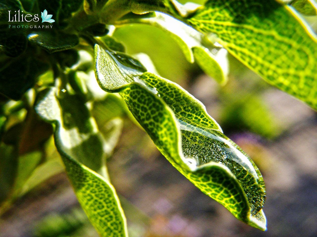leaf, green color, growth, plant, close-up, no people, day, nature, focus on foreground, outdoors, beauty in nature, fragility, animal themes, freshness