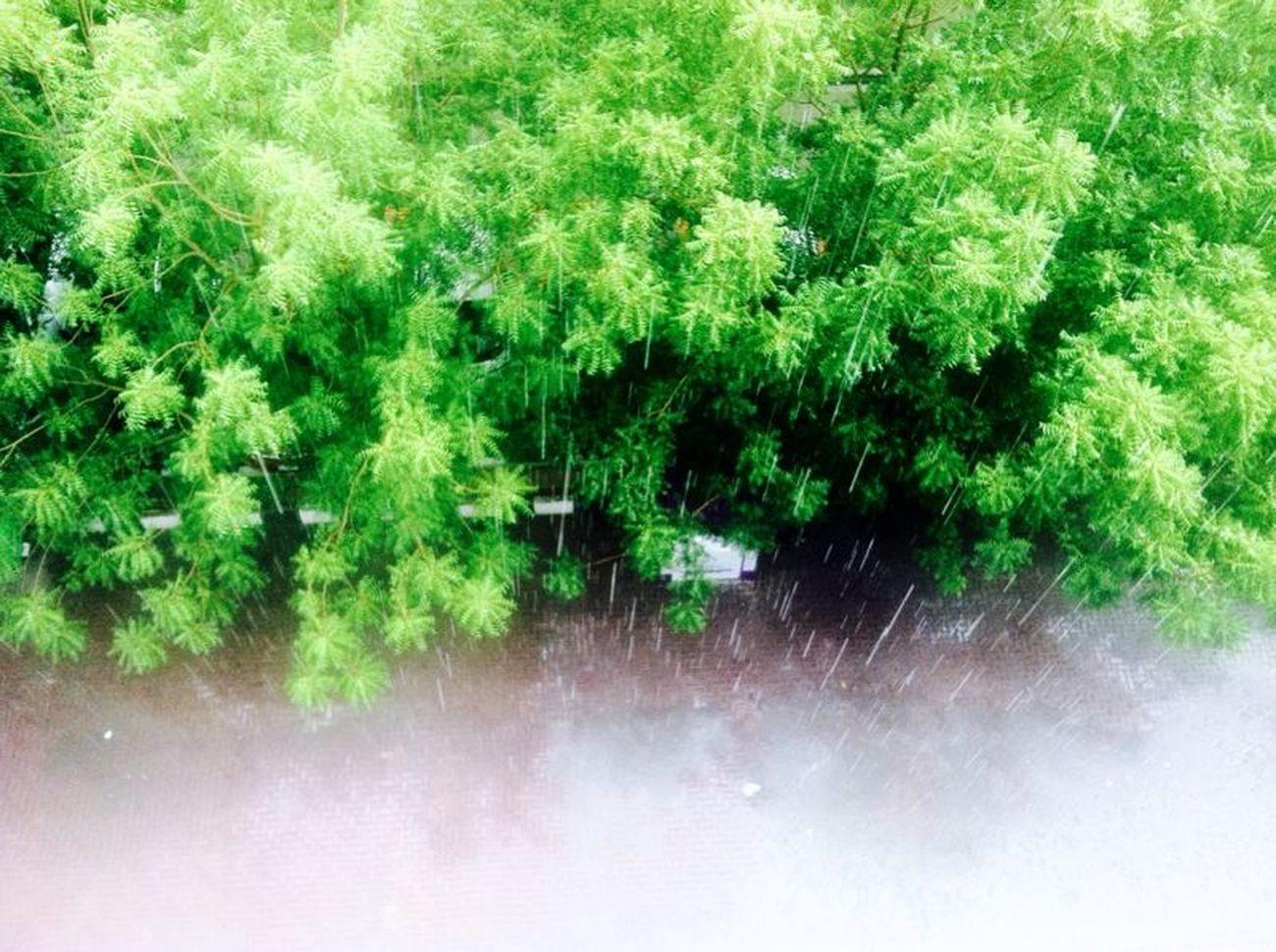 Rain on Trees Hello World Hello Nature !!