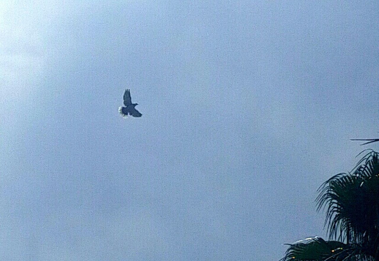 Check This Out Enjoying Life Taking Photos In My Backyard Peaceful Bird In Flight From My Point Of View Not A Soul Around... Palmtree