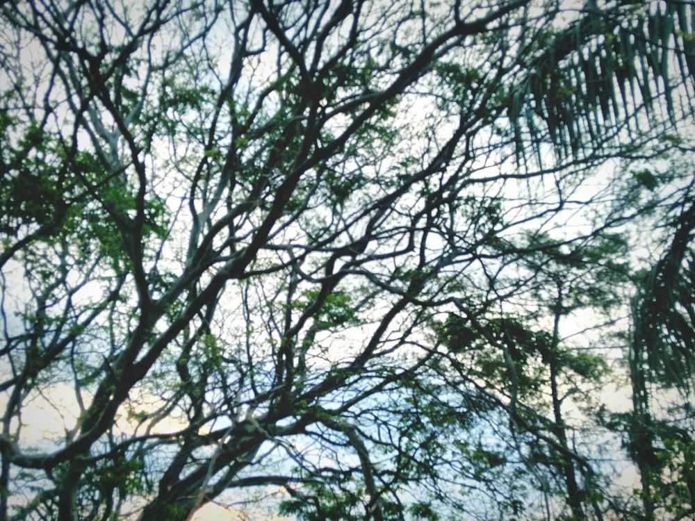 Tree Nature Growth Beauty In Nature No People Day Outdoors Sky Sundown Naturebackground Sky And Clouds Tree And Sky Tree Branches Green