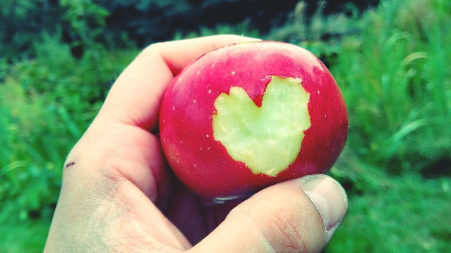Appleheart Heart ❤ Taking Photos Check This Out Showcase August Summer 2016 August2016 From My Point Of View Holiday 2016 Altmark Summer ☀ An Apple Keep A Doctor Away. Apple In My Garden Bokeh Red Appreciate The Little Things In Life Red Apple