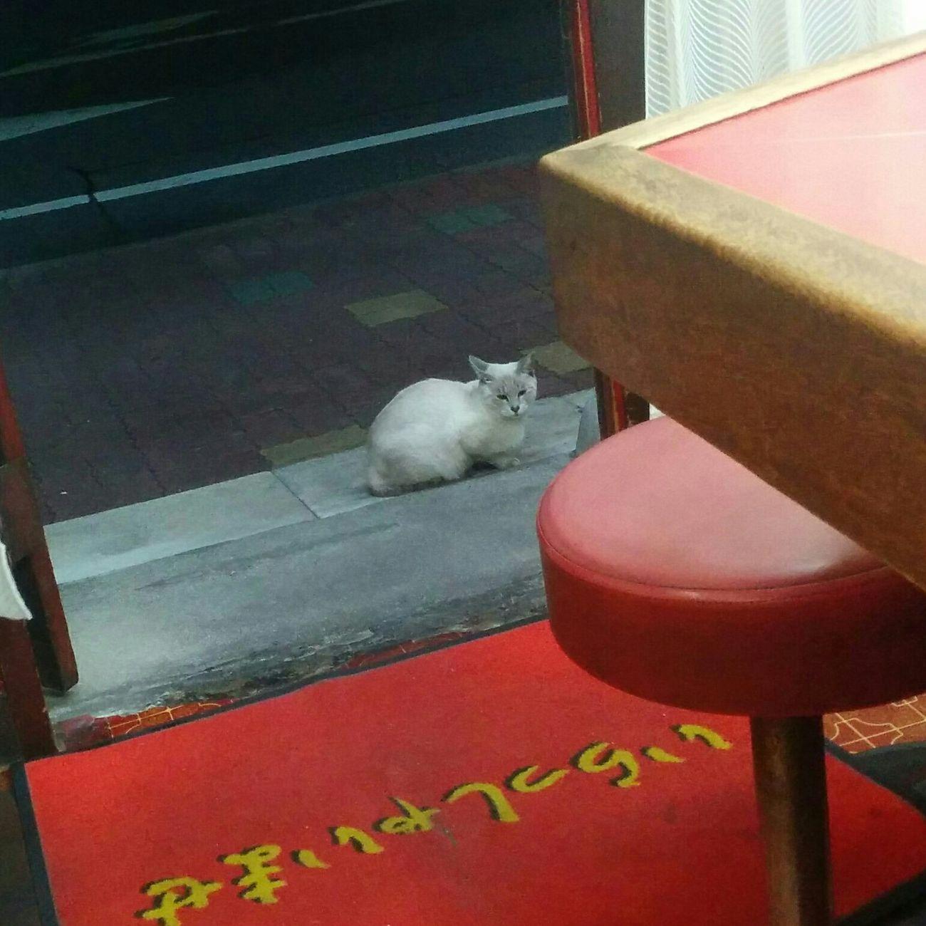 猫ちゃんが入り口で佇んでる