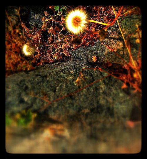 Nature Flowers for EyeEm Best Shots and EyeEm Best Edits