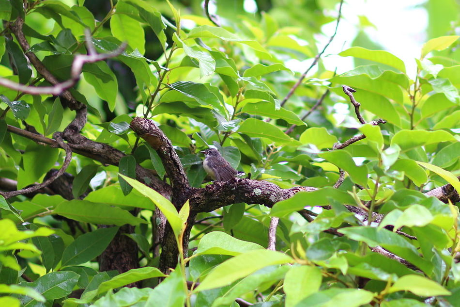 Beauty In Nature Bird Branch Green Green Color Growing Growth Leaf Nature No People Outdoors Plant Tree Vogel นก นกบนต้นไม้