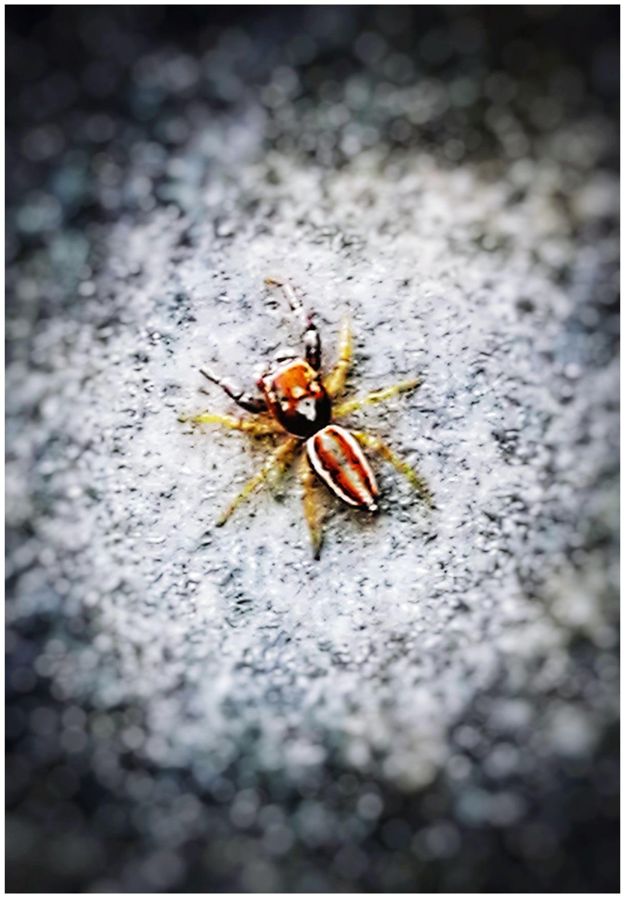 Animal Themes Animals In The Wild Insect Animal Wildlife Nature Spider Spiderweb Spiderworld