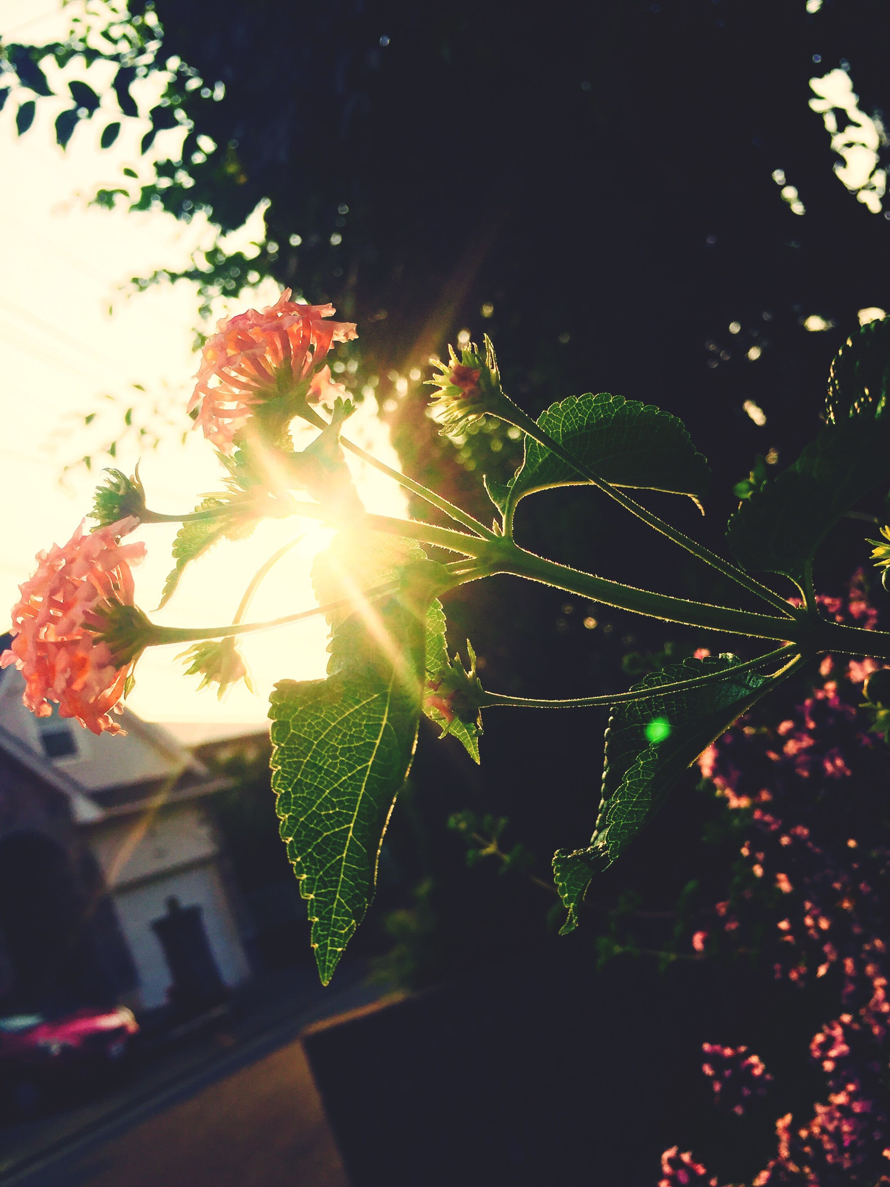 growth, illuminated, flower, night, plant, leaf, nature, beauty in nature, fragility, green color, lens flare, decoration, outdoors, no people, close-up, pink color, glowing, growing, multi colored, sunbeam, tranquility, botany