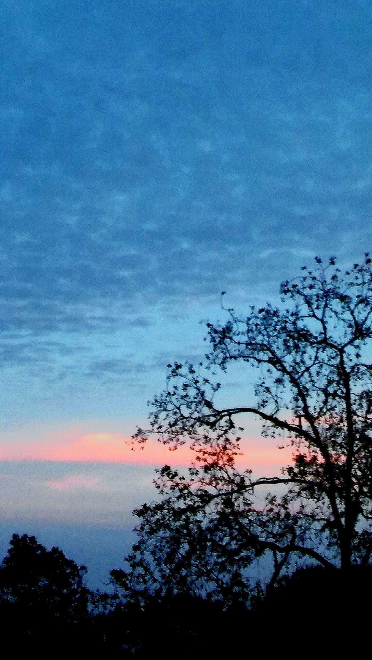 Sunset_captures sunset Tree Nature Sky Beauty In Nature Cloud - Sky No People Trees And Sky Outdoors Day Serene Outdoors Trees And Nature Fulllength Eyeembestshot_landscape EyeEmBestShot's Sunset And Clouds  Beauty In Nature