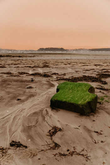 2pm Ashes day at low tide - that photo was shot that time when the ashes from the Portuguese fire came up to Brittany accompanied by a sandstorm creating a unique view. Brittany France Green Green Color Landscape_Collection Nature Beach Beauty In Nature Day Fragility Horizon Over Water Landscape Landscape_photography Low Tide Low Tide Revelations Nature No People Outdoors Sand Scenics Sea Sky Tide Tranquility Water