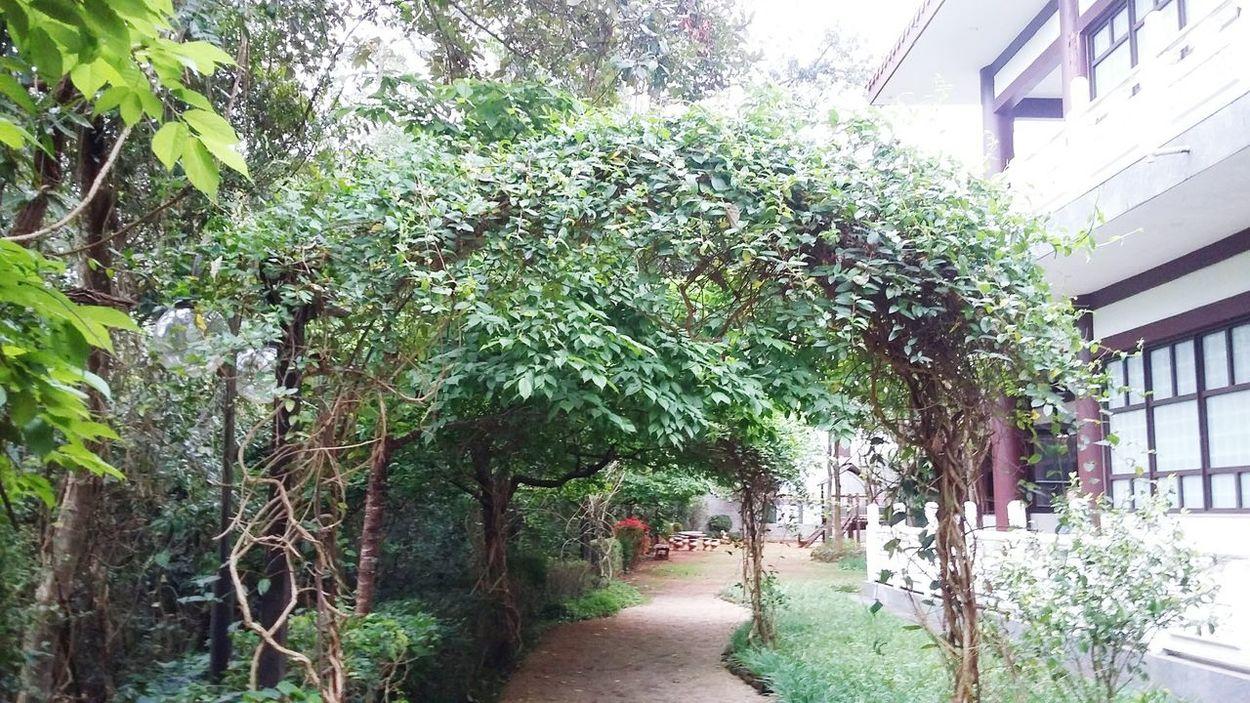 EyeEm Best Shots - Nature EyeEm Nature Lover Flowers, Nature And Beauty Contemplation Garden Jardan