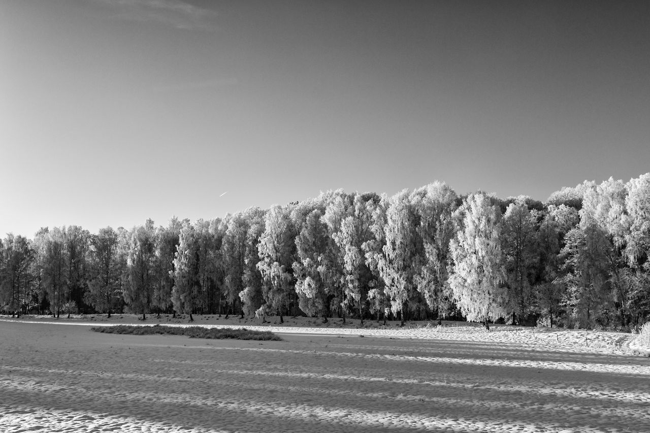 Winter landscape (bnw version) - Tree Nature Landscape Scenics Idyllic Cold Temperature EyeEm Best Shots - Black + White EyeEm Masterclass The Week Of Eyeem Black & White Black And White Blackandwhite Exceptional Photographs First Eyeem Photo Hello World Monochrome Monochrome Photography Tranquility Tranquil Scene Eye4photography  Snow Winter Treelined Forest Outdoors