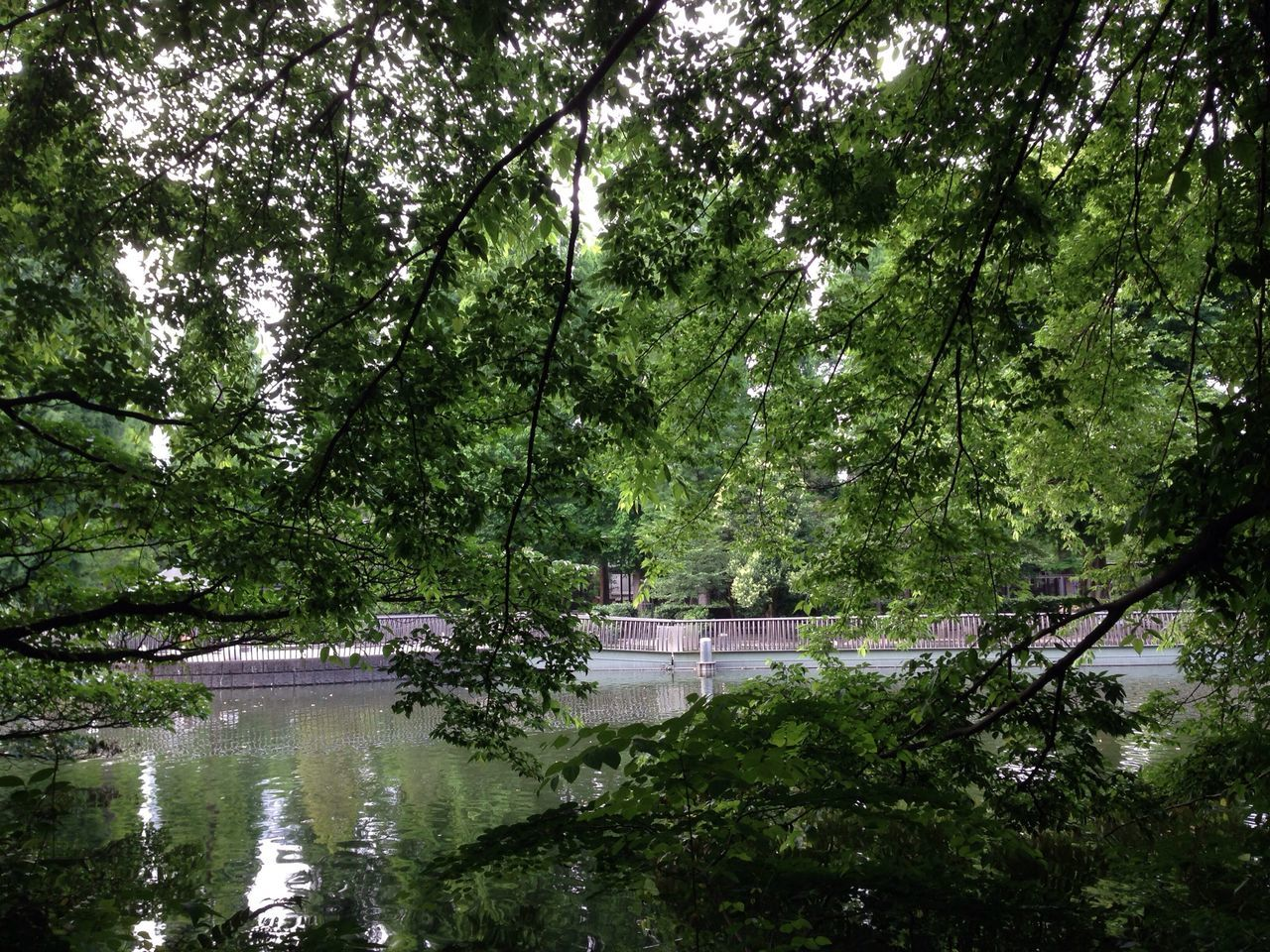View of trees and pond in park