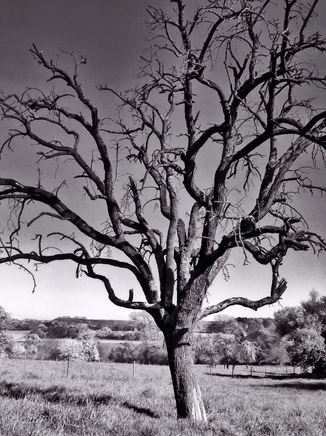 Tree OpenEdit IPhoneography Taking Photos Eye Em Nature Lover Trees Blackandwhite Black And White Black & White
