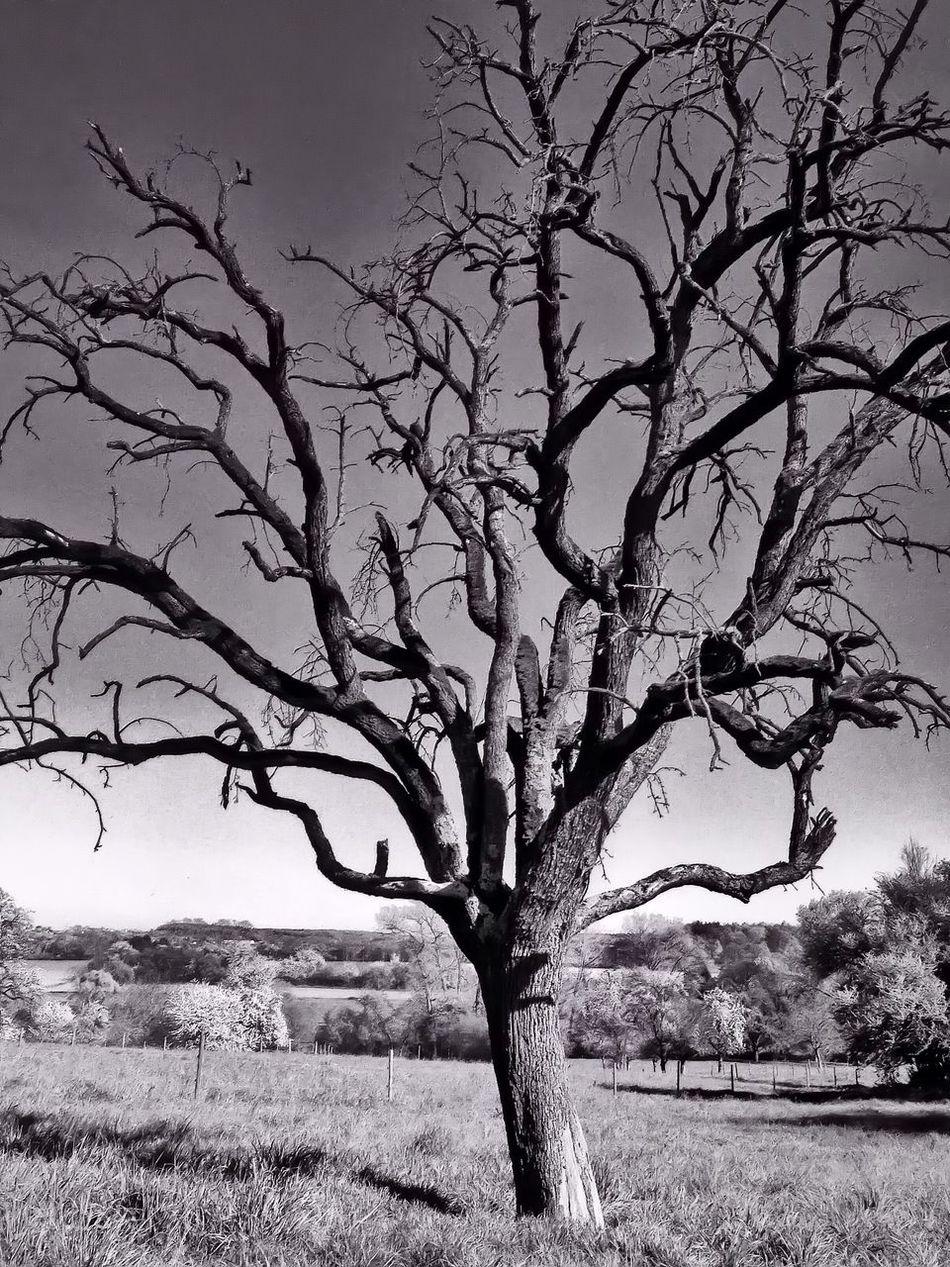 Tree OpenEdit IPhoneography Taking Photos Eye Em Nature Lover Trees Blackandwhite Black And White Black & White