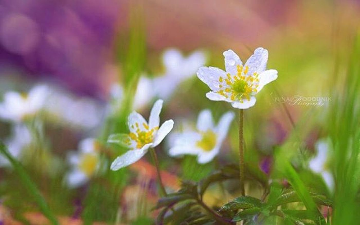 Awakening ☺ Spring Springtime Springmood Colors Nature_captures Naturephotography Macrophotography Macro_captures_ Instadaily Photooftheday Flowers Ilovespring Igslovenia Slovenia
