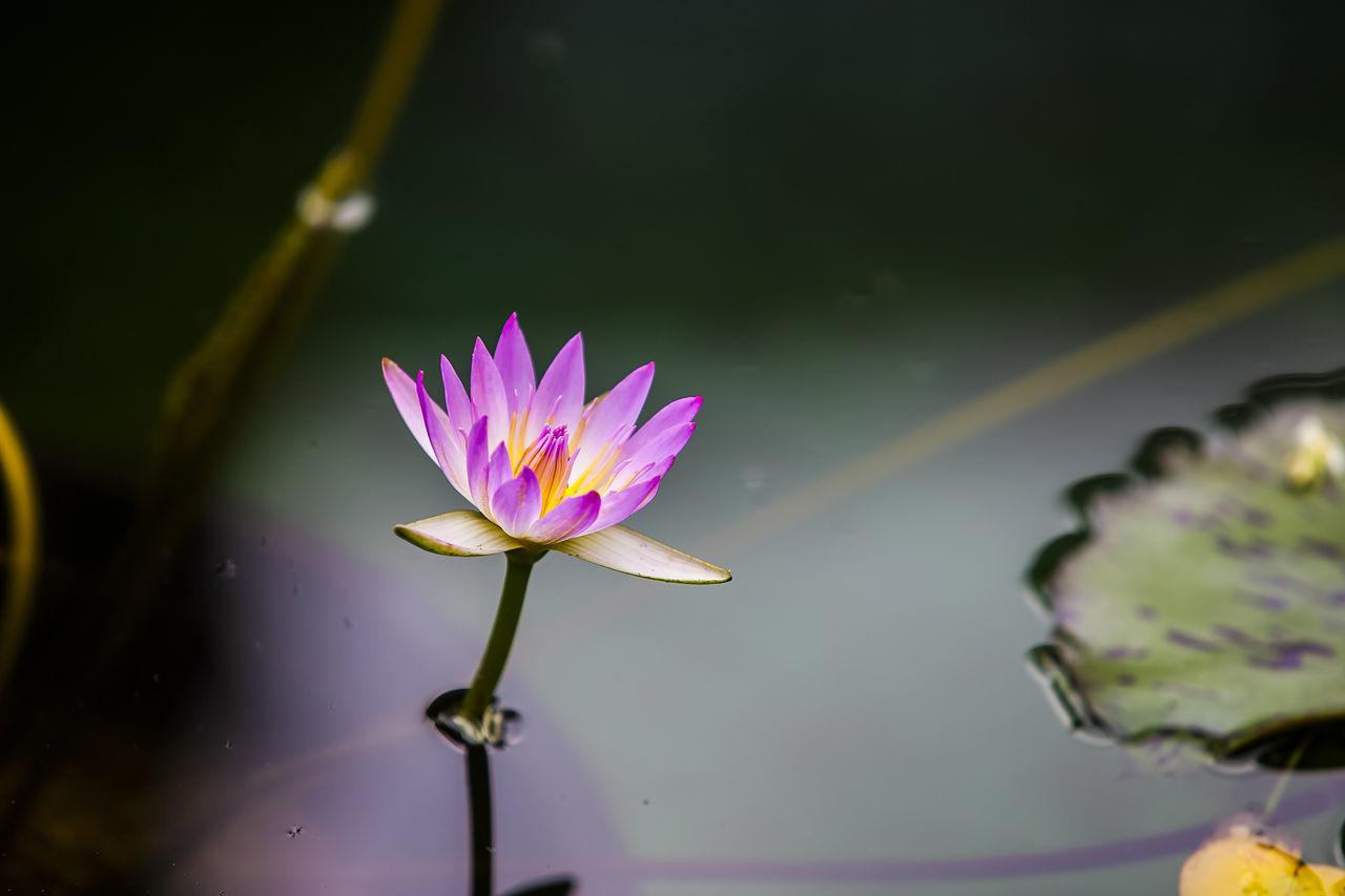 Jogeasa Buddist Temple Seoul Korea Water Lily Flower