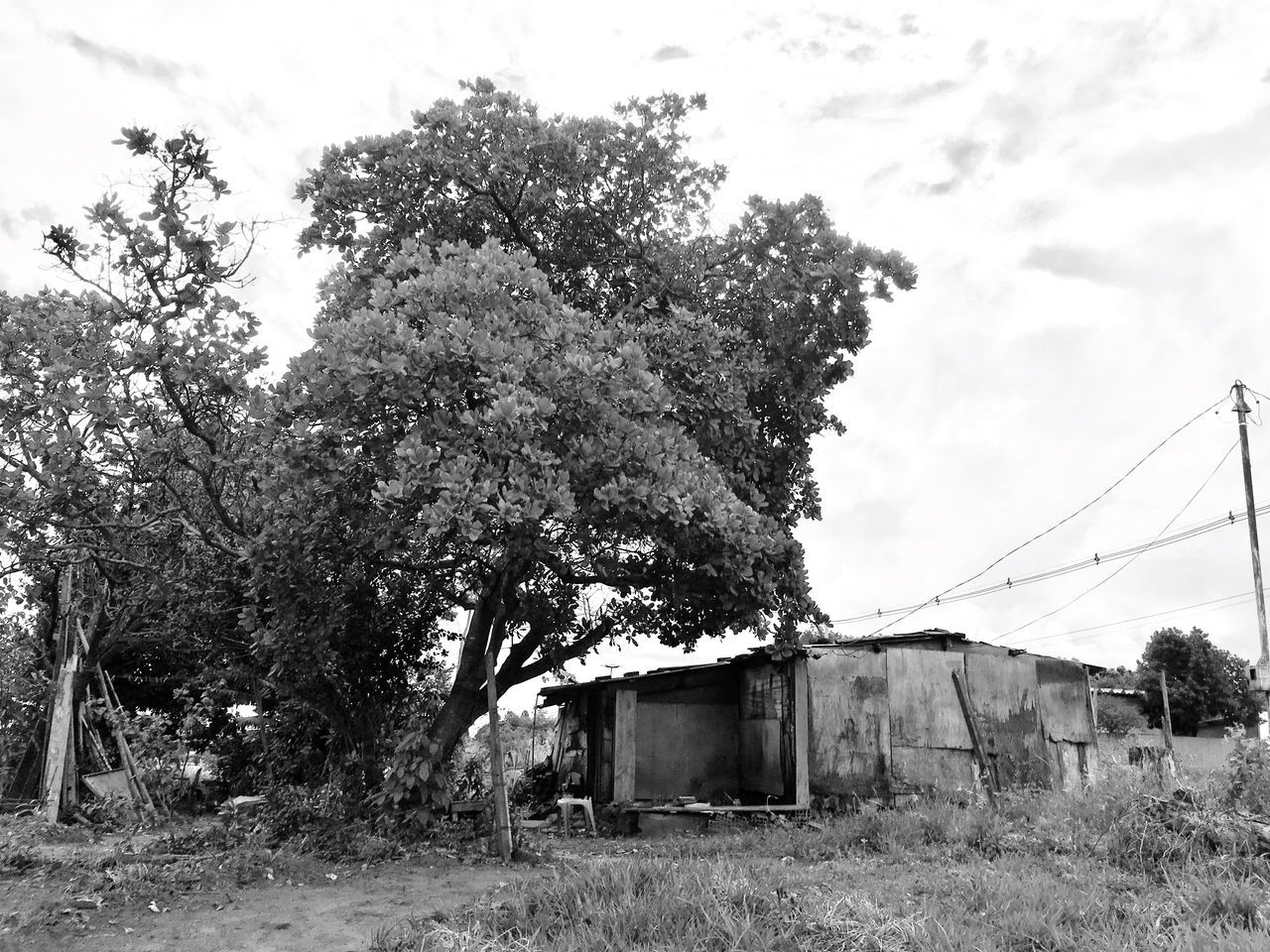 Tree Sky No People Built Structure Nature Outdoors Abandoned Building Exterior Day Architecture Landscape
