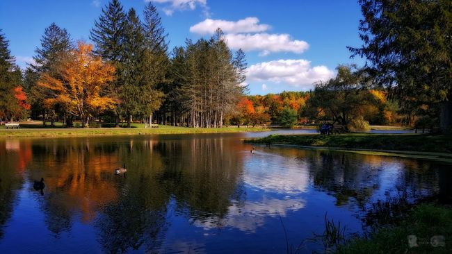 Good Morning! Reflection Tree Water Sky Blue Nature Outdoors No People Horizontal Reflection Lake Lake Day Cloud - Sky Beauty In Nature EyeEm Best Shots Landscape Fall Colors Fall Beauty EyeEm Nature Lover Tranquility Scenics Beauty In Nature Tree Nature