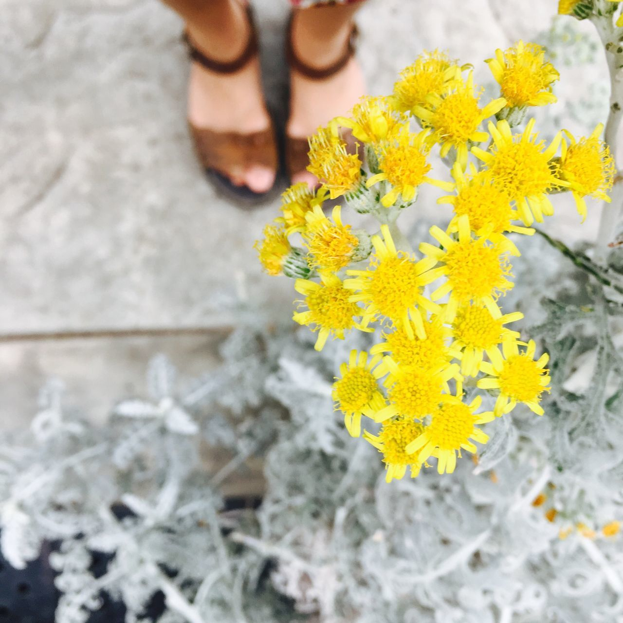 Happy Feet Flower Yellow Low Section Human Leg Human Body Part Real People Close-up Outdoors One Person Day Freshness Petal Focus On Foreground Fragility Nature Lifestyles Beauty In Nature Women Flower Head Human Hand