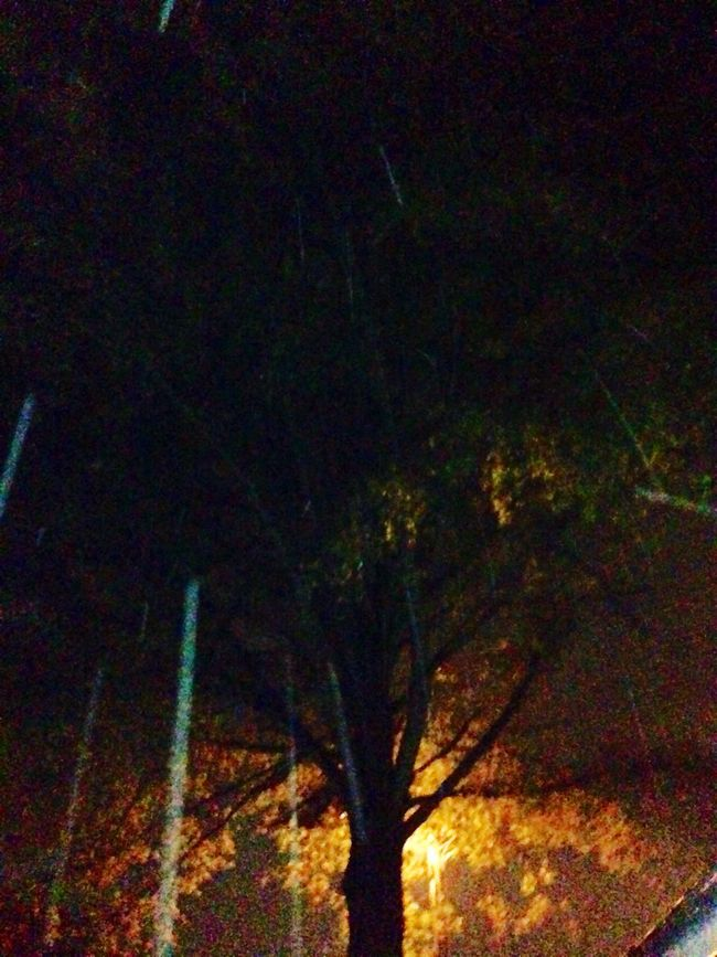 Hanging Out Taking Photos Nightphotography Blueeyedblonde North Carolina Trees Rainynights Hugging A Tree TreePorn Tree_collection  EyeEm Nature Lover Landscape_Collection Landscape Scenery