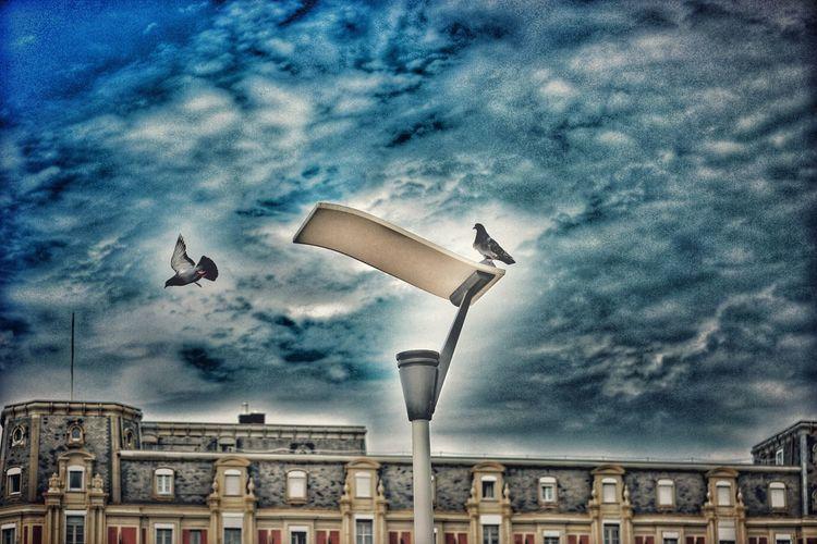http://youtu.be/X31SjB0SwOI Sunmer2015 NX1 France Birds Of EyeEm  Getting Inspired Eye4photography