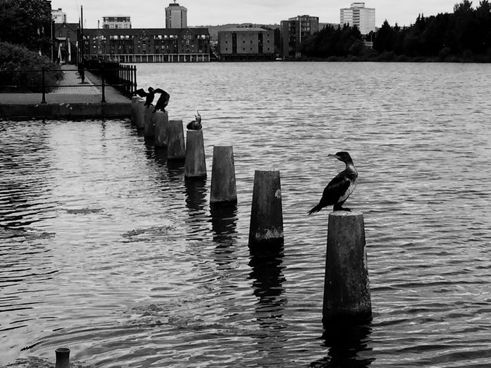 Eye4photography  Birds Water_collection IPhoneography