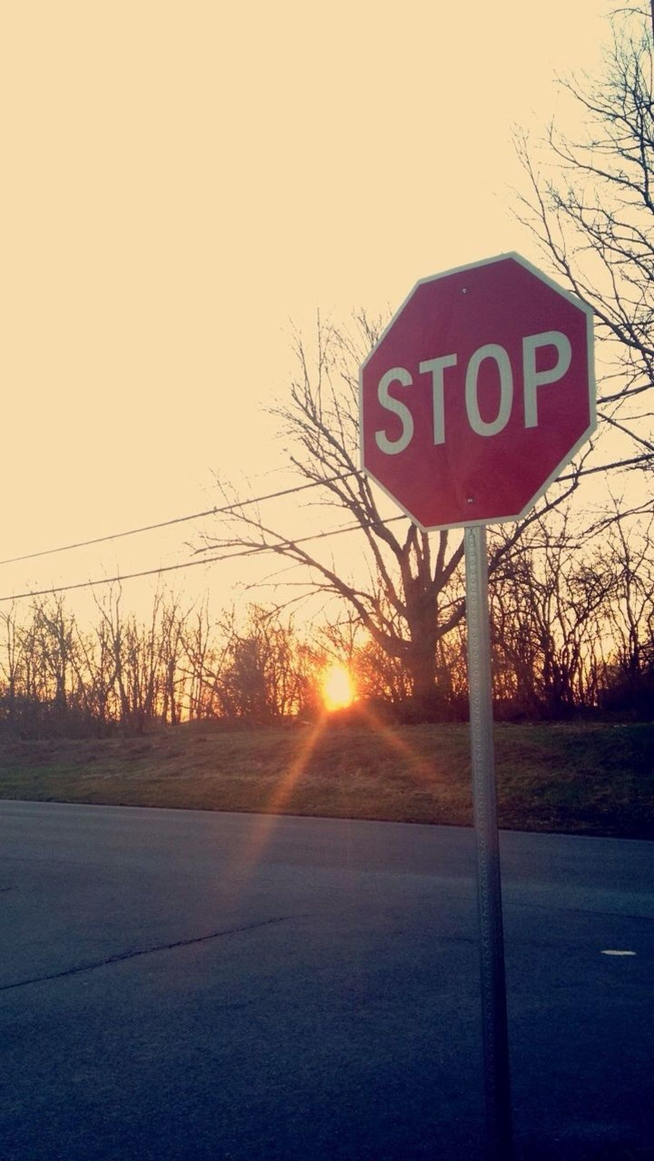 Road Sign Communication Text Stop Sign Road Sunlight No People Guidance Nature Tree Sky Outdoors Bare Tree Speed Limit Sign Day Beauty In Nature