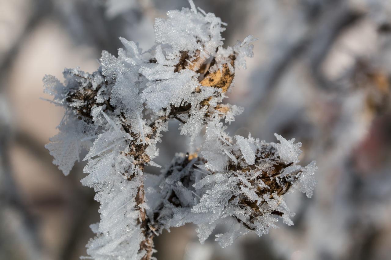 Frozen Cristal Frost Frozen Ice Ice Cristal Macro_collection Makro Selective Focus