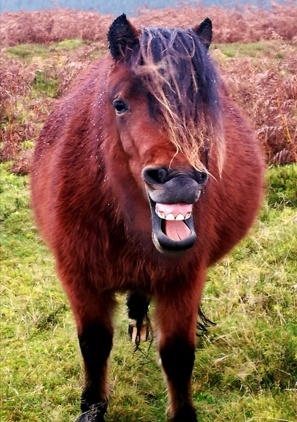 Laughing Pony One Animal Grass Nature Wildlife Mammal Animal Themes Outdoors Animals In The Wild Nature Close-up