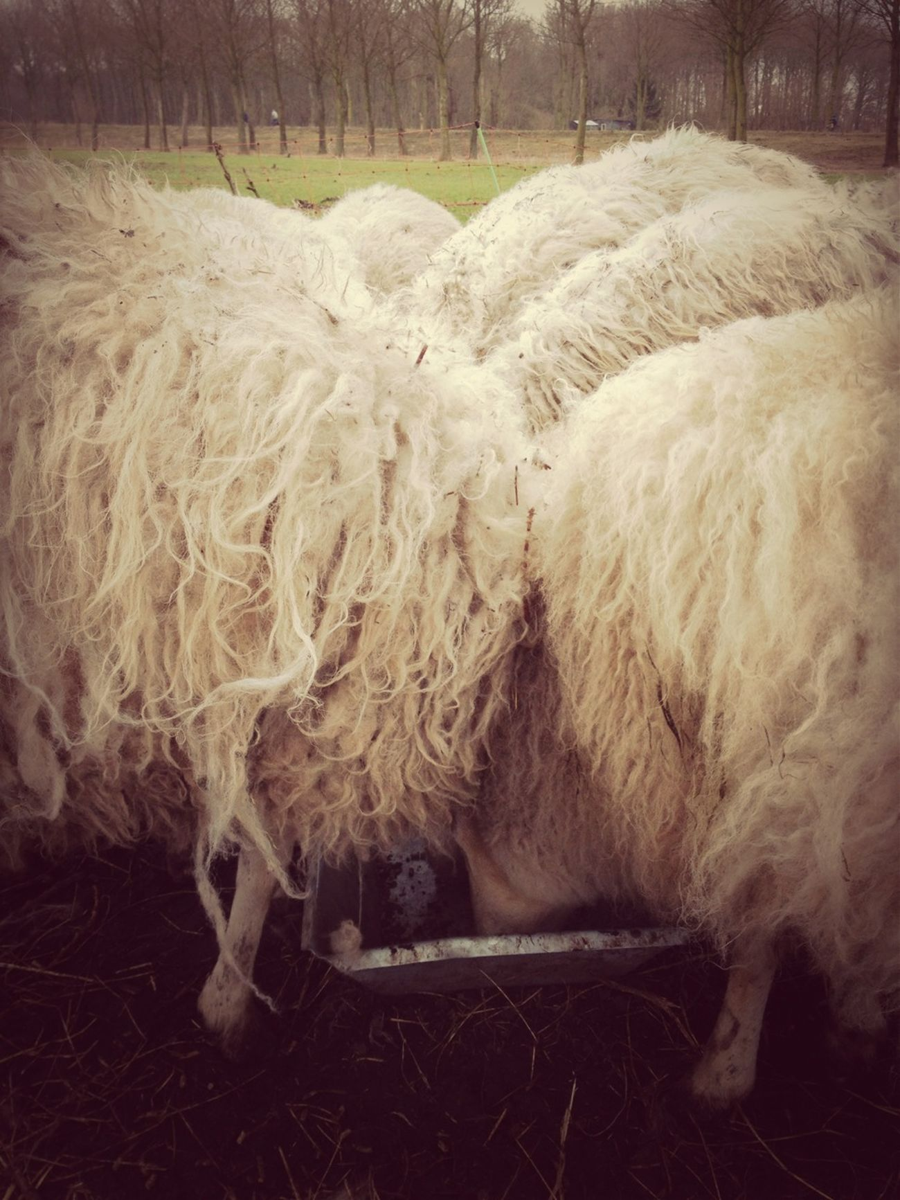 Sheep@Work
