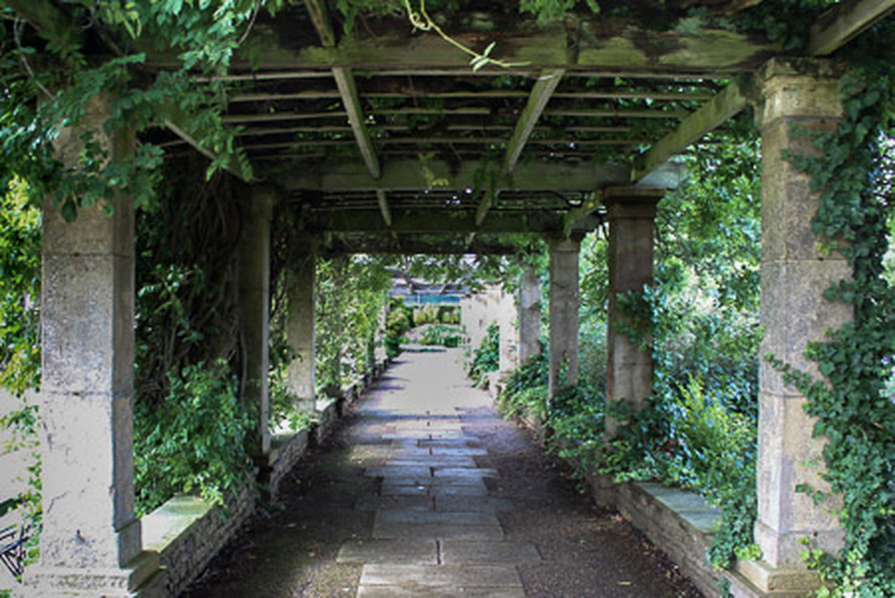 Arch Architectural Column Architecture Built Structure Colonnade Corridor Creeper Plant Day Diminishing Perspective Formal Garden Growth In A Row Long Narrow No People Outdoors Passage Pedestrian Walkway Pergola Plant The Way Forward Walkway