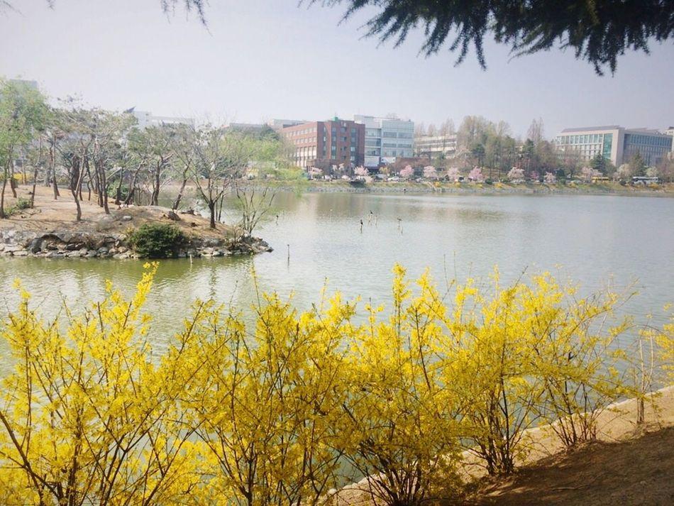 Seoul EyeEm Nature Korea Konkuk Univ Lake View Lake Flower Spring