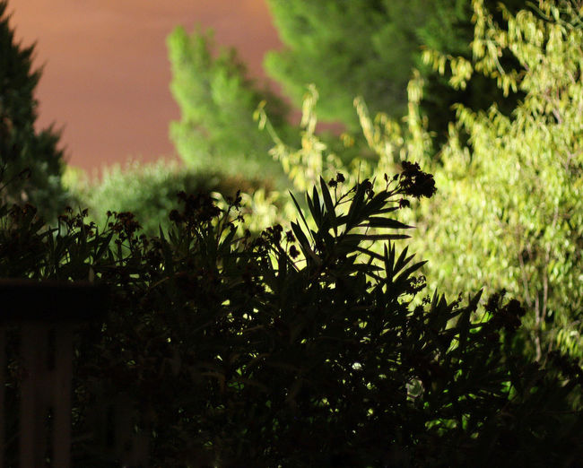 Bandol Beauty In Nature Botany Côte D'Azur Evening Garden By Night Green Green Color Nature Night Night Lights Nightphotography Plant Tree Tropical Climate