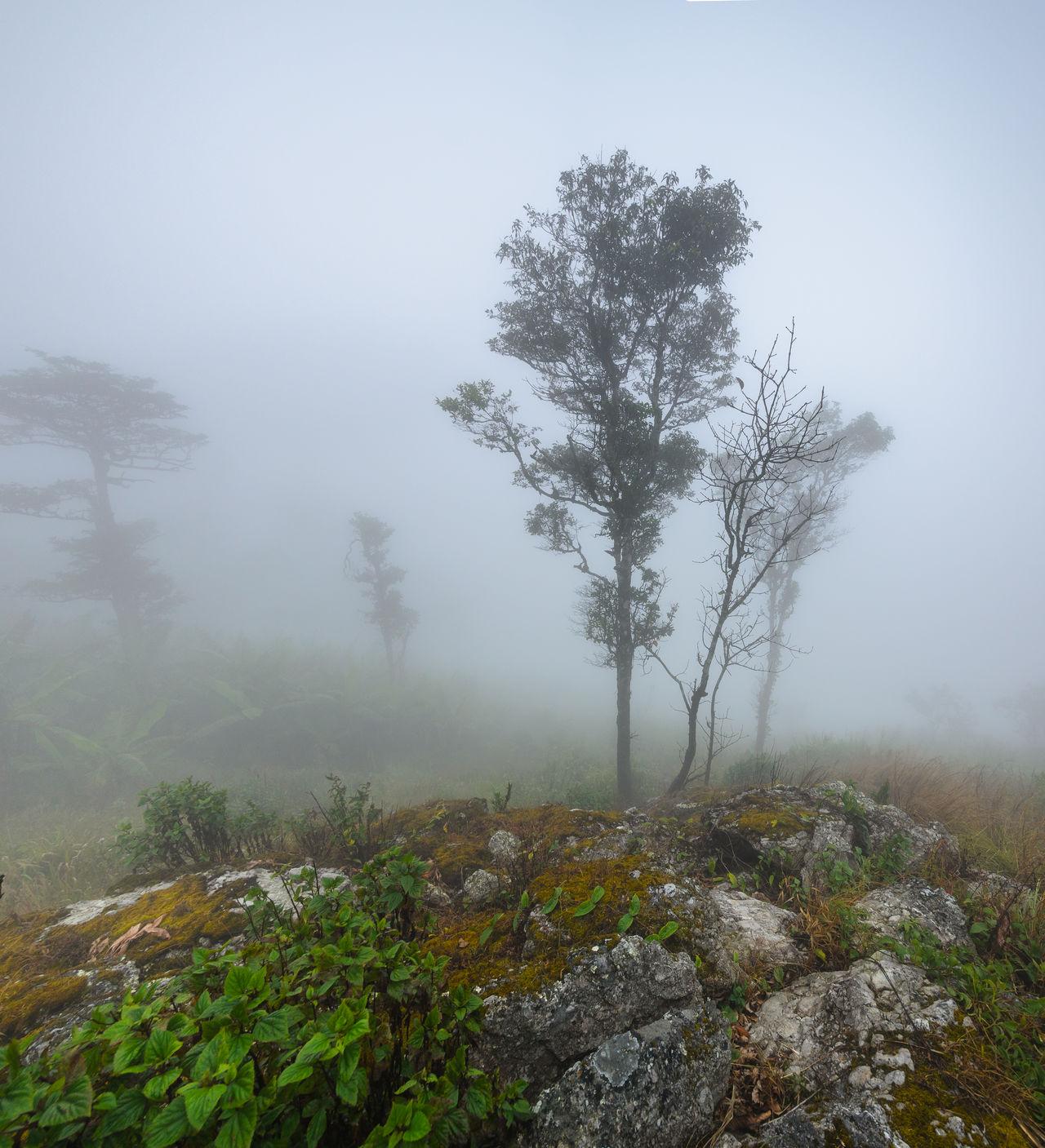 phu langka,thailand Autumn Beautiful Environment Fog Forest Green High Landscape Leaf Mountain National Park Nature Outdoors Peace Phayao Phu Langka PlandeDios Rock - Object Thailand Travel Destinations Tree Unseen Unseen Thailand