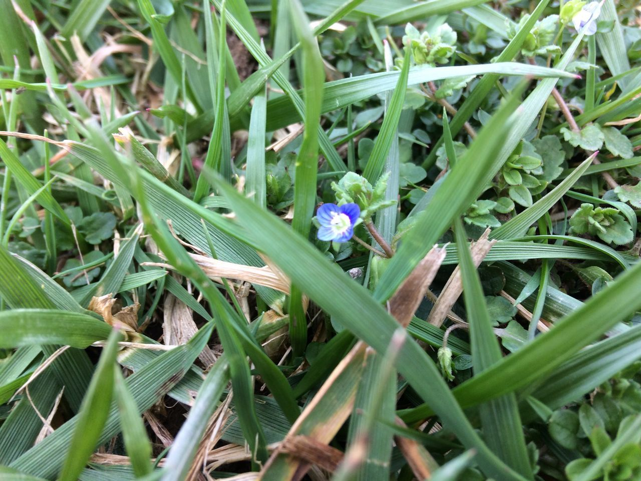 Growth Nature Green Color Beauty In Nature Plant Fragility Grass Flower Leaf Outdoors Field Freshness Day Insect No People Flower Head Close-up Blue Flowers