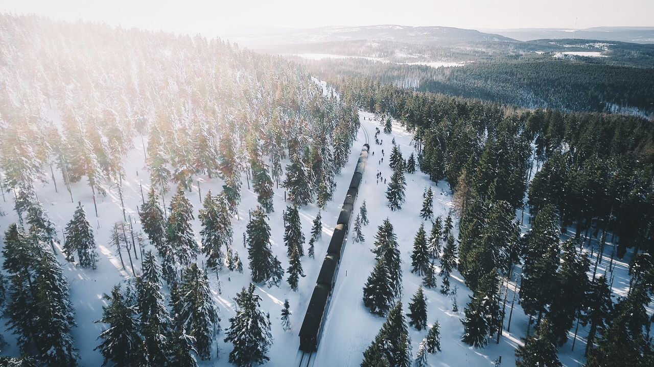 Driving into the sun. Harz Brocken Winter Nature Snow Tree Growth Tranquility Beauty In Nature Cold Temperature Outdoors Tranquil Scene Scenics Day Forest No People Landscape Mountain Sky