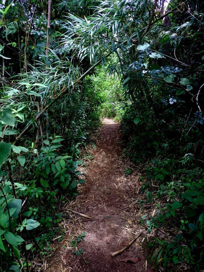Getting Inspired TrekkingDay Atibaia Pedra Grande Walk This Way The Places I've Been Today
