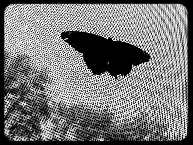 Black And White Silhouette Butterfly Win An EyeEm T-Shirt