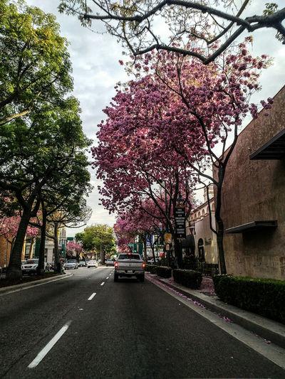 Flowers Trees Tree Flowers Streetphotography Fullerton, CA Downtown Fullerton This Week On Eyeem