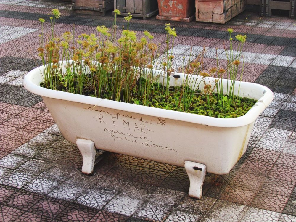 Plant Potted Plant Growth Nature Sunlight Day No People Outdoors Beauty In Nature Art Poetry Bathtub Green White Adapted To The City