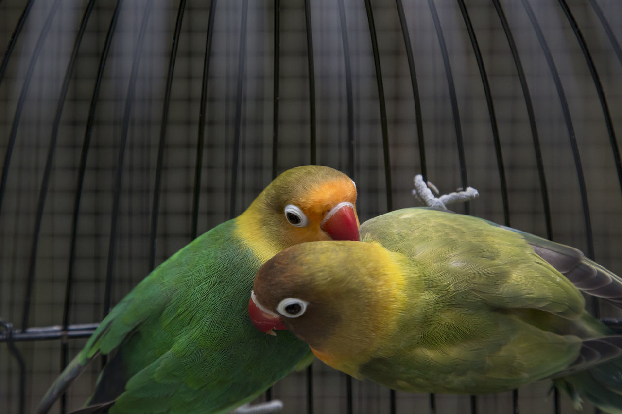 bird, animal themes, animals in the wild, animal wildlife, green color, parrot, no people, perching, nature, outdoors, day, yellow, close-up, beauty in nature, mammal