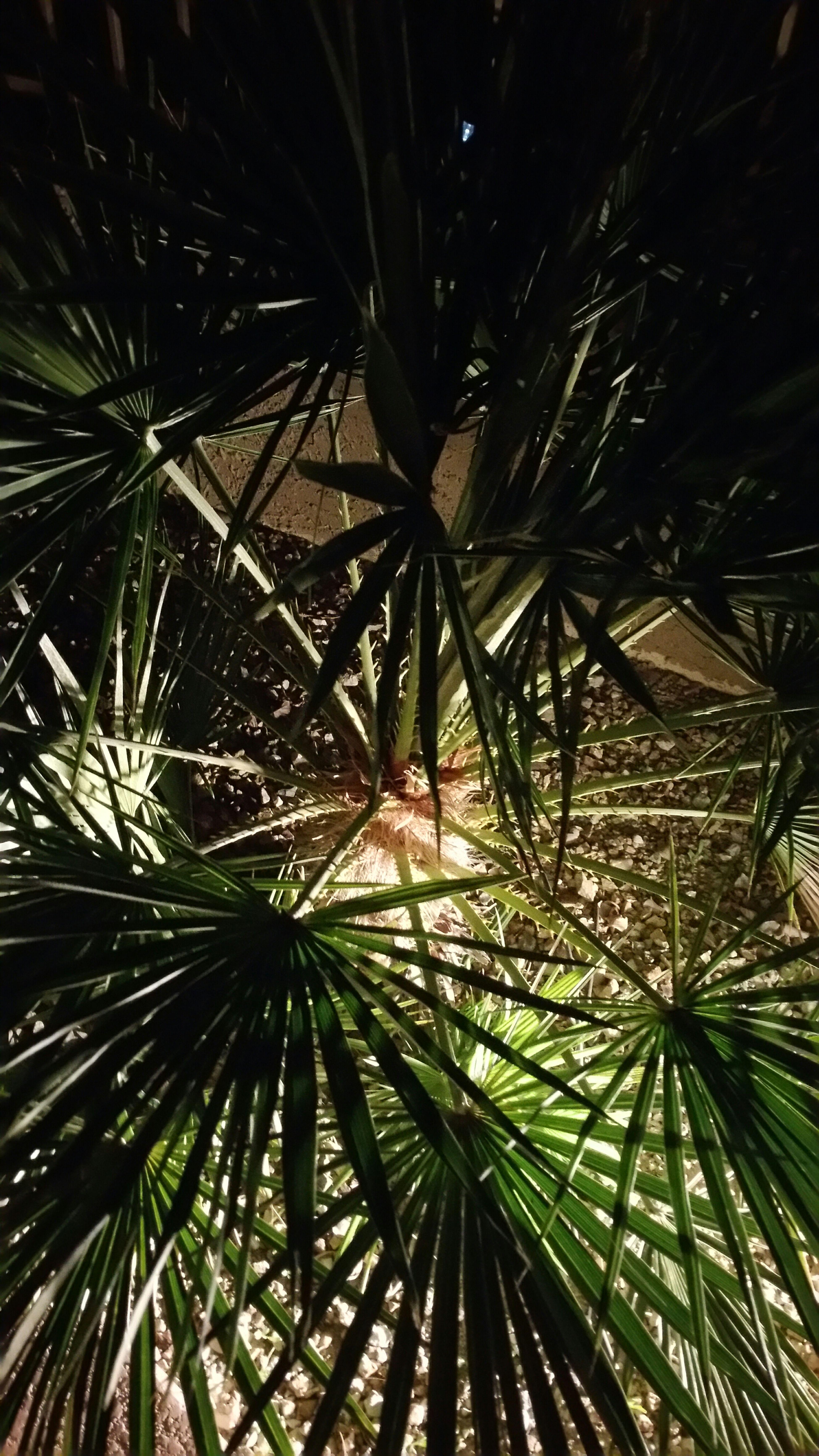 Palmtree It's Dark Outside Idcimstilltakingpictures