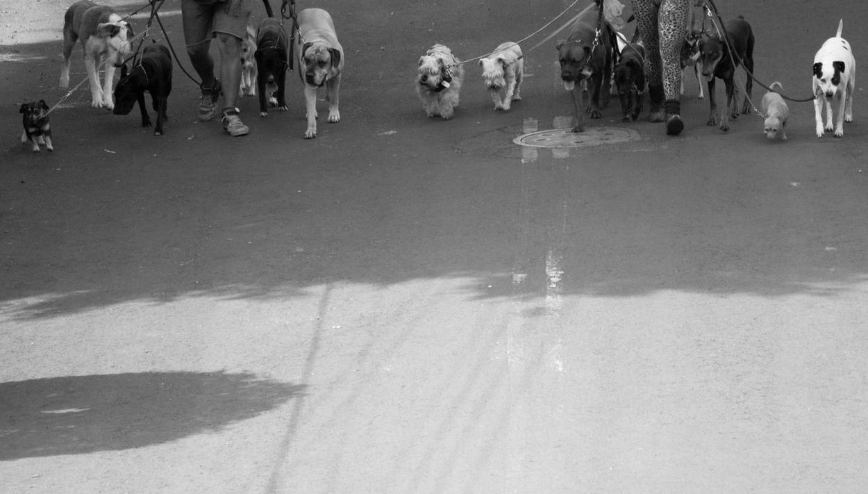 Animal Themes Day Dogs Walking Dogslife Domestic Animals Human Body Part Large Group Of People Mammal Outdoors People Real People